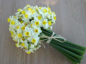 Flor del dia: narciso 3